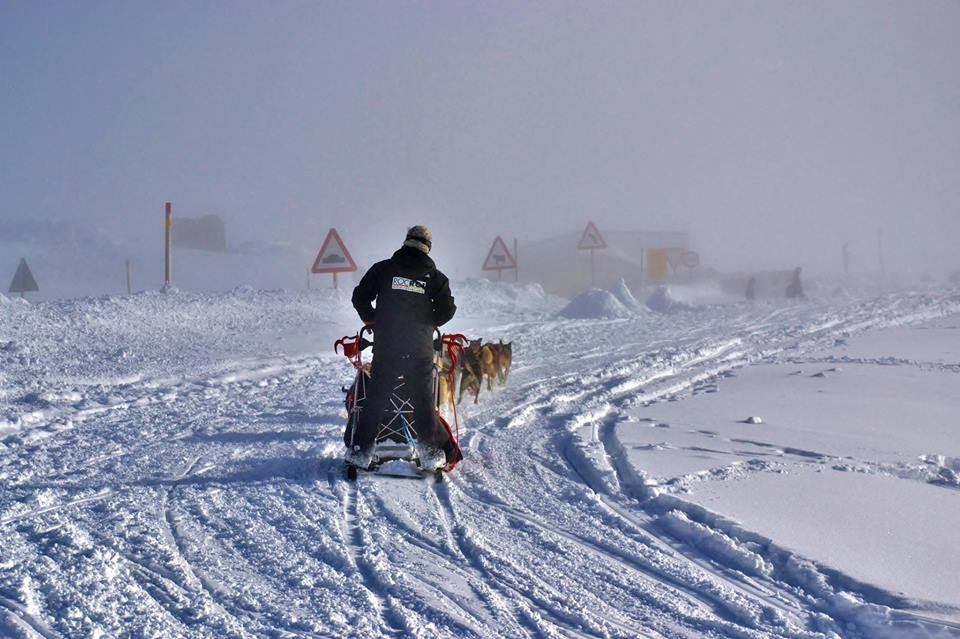Trineos de perros en ROCROI ADVENTURE CENTER / GRAND VALIRA