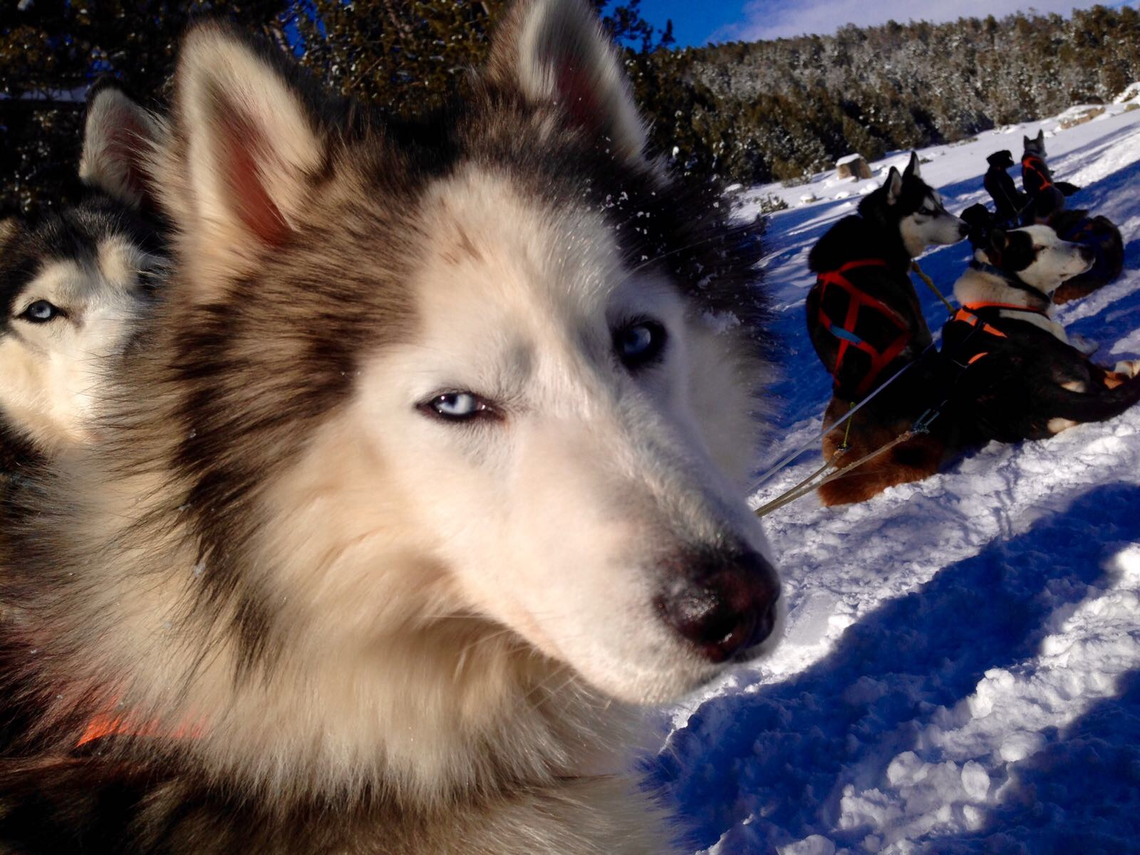 Secrets du Mushing-6