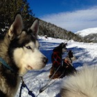 DISCOVER AL THE SECRETS OF MUSHING