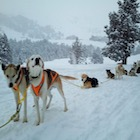 MORE ABOUT MUSHING