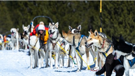 MUSHING - PASEO 2KM