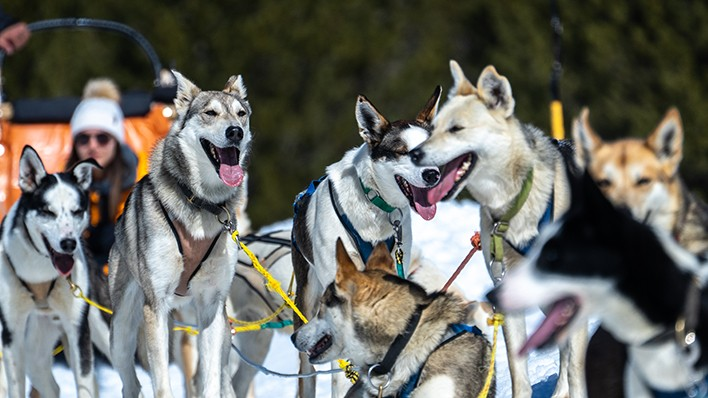 SLED DOGS RIDE - FAMILY PLAN 2 ADULTS AND 2 KIDS 2KM