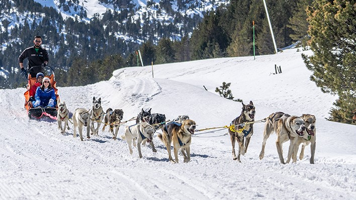 SLED DOGS RIDE 3 KM